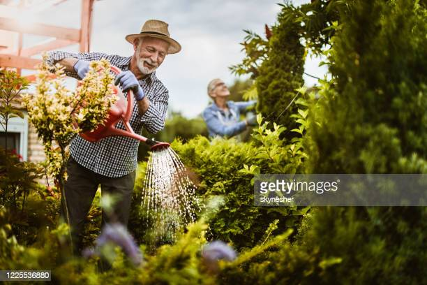 smiling senior man gardening in the backyard. - watering stock pictures, royalty-free photos & images