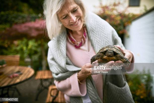smiling senior woman holding a tortoise in garden - reptile stock pictures, royalty-free photos & images
