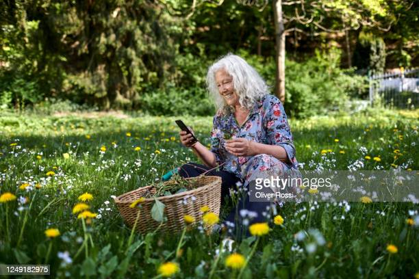 smiling senior woman sitting in meadow in garden holding smartphone and flower - floral pattern dress stock pictures, royalty-free photos & images