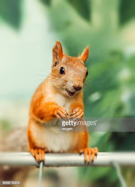 Smiling Squirrel sitting on a metallic pole near balcony