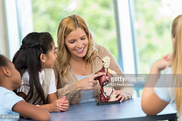 Smiling teacher showing young students model of the human body