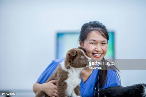 smiling vet with a dog - fatcamera stock pictures, royalty-free photos & images