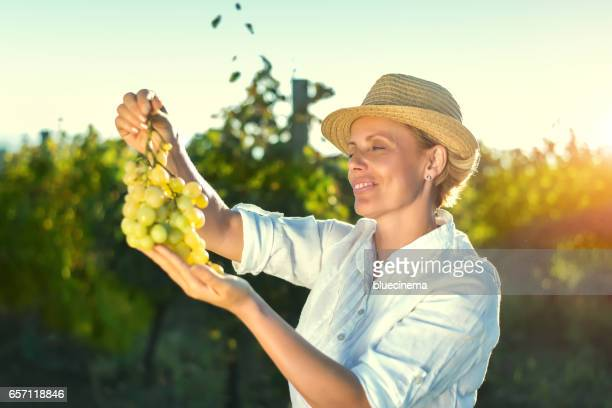 smiling vintner examining grapes in vineyard - grape harvest stock pictures, royalty-free photos & images