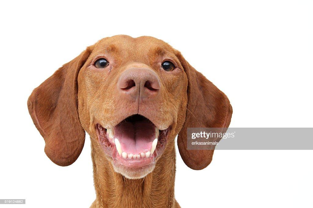 Image result for dog smile
