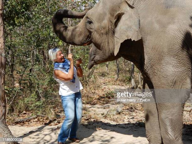 smiling woman feeding elephant - asian elephant stock pictures, royalty-free photos & images