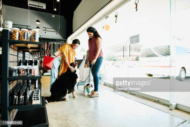 smiling woman greeting friends dog while shopping in pet store - pet equipment stock pictures, royalty-free photos & images
