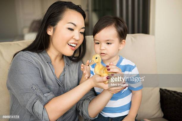Smiling woman holding a yellow duckling in her hands, her young son watching.