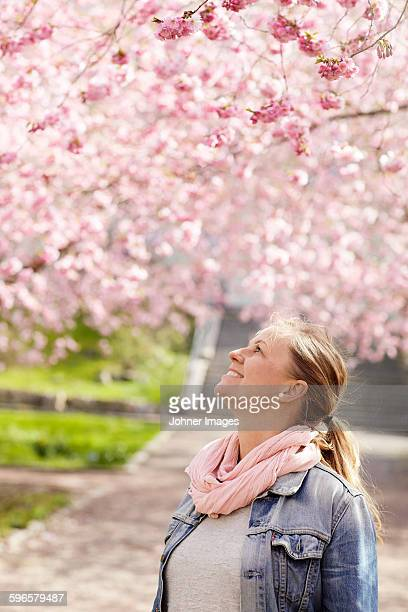 smiling woman looking at cherry blossoms - ヨーテボリ ストックフォトと画像