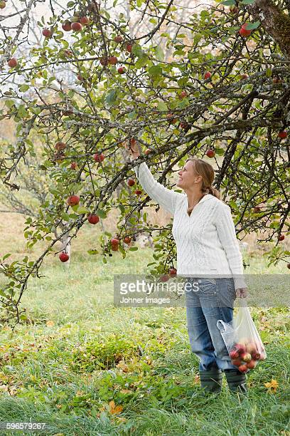 Smiling woman picking apples