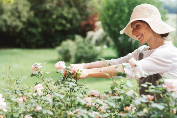 Smiling woman picking roses in garden