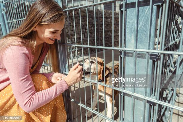 smiling woman playing with dog in cage - animal shelter stock pictures, royalty-free photos & images