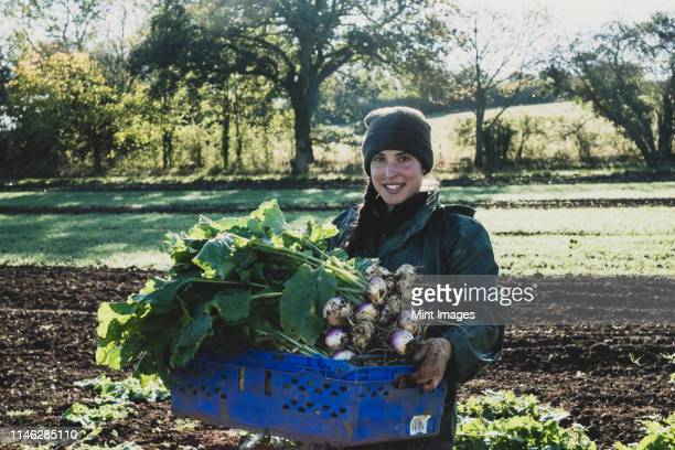 smiling woman standing in field, holding blue crate with freshly harvested turnips, looking at camera. - turnip stock pictures, royalty-free photos & images