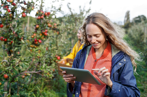 Smiling woman using tablet in apple orchard - gettyimageskorea