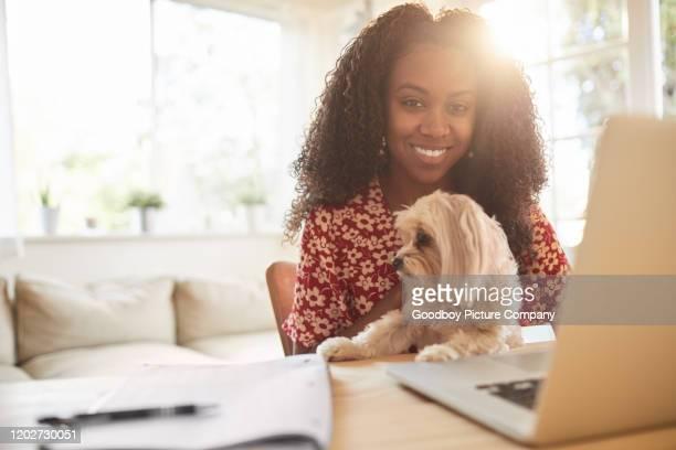 donna sorridente che lavora a casa con il suo cane in grembo - dog pad foto e immagini stock