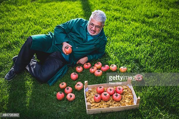 Trabajador sonriente sosteniendo tomates
