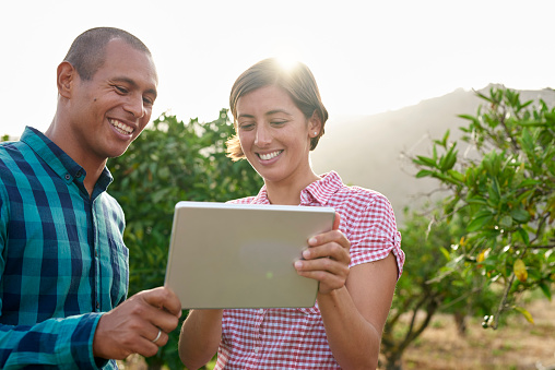 Smiling young couple looking at tablet in an orchard - gettyimageskorea