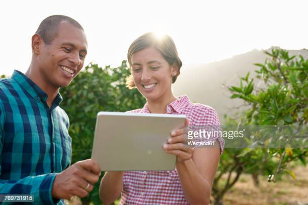 Smiling young couple looking at tablet in an orchard