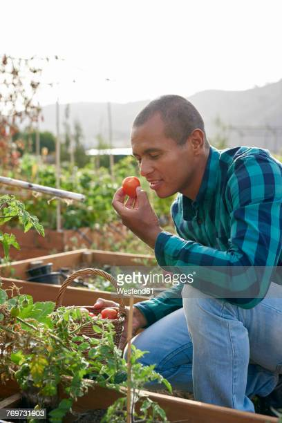 Smiling young farmer smelling a tomato