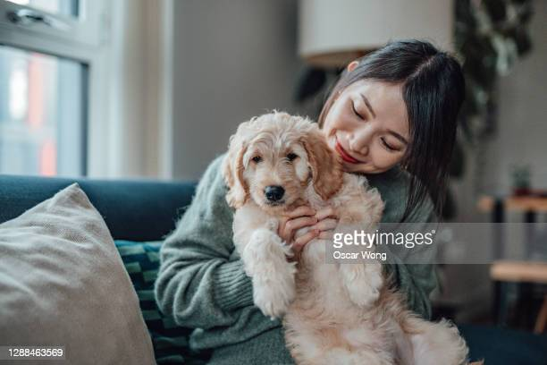 smiling young woman pampering her puppy at home - puppies stock pictures, royalty-free photos & images