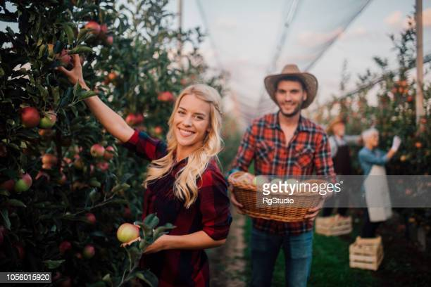 Smiling young woman picking up apples