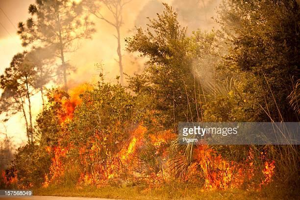 Smoke and burnt wilderness emergency