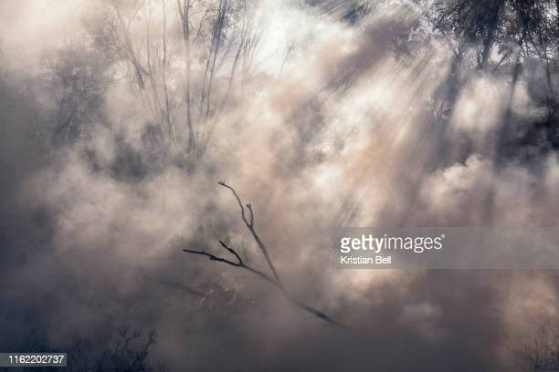 smoke and light in a eucalypt woodland during a prescribed patch burn - forest fire stock pictures, royalty-free photos & images