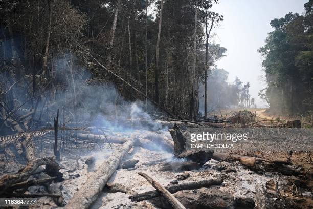 Smoke billows from the ashes of felled trees in the surroundings of Porto Velho, Rondonia State, in the Amazon basin in west-central Brazil, on...