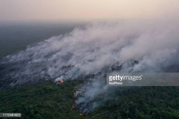 Smoke covers a forest during fires in Palangka Raya Central Kalimantan province Indonesia September 29 2019 Firefighters military personnel and...