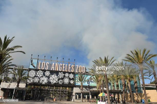 Smoke from a wildfire rises over the Los Angeles Zoo in Griffith Park in Los Angeles California November 9 2018 Staff at the Los Angeles Zoo which is...
