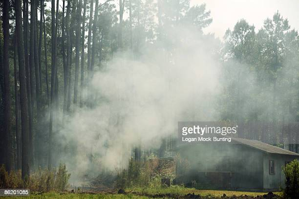 Smoke from backfires lit by the Forestry Service filters through pine trees April 24 2009 in Horry County North Carolina The backfires are meant to...
