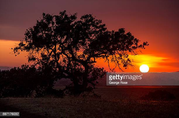 Smoke from the 33000acre Rey Fire sends smoke billowing into the air and creating colorful sunsets on August 21 in Santa Ynez California Because of...
