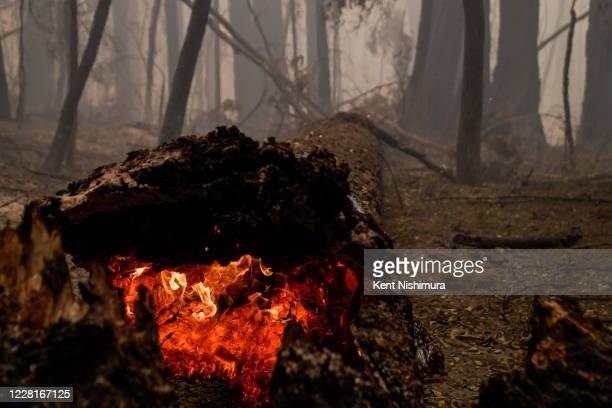 Smoke hangs low in the air at Big Basin Redwoods State Park as some redwoods are still on fire, like this one that fell across the road on Saturday,...