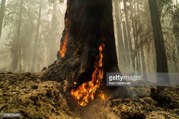 Smoke hangs low in the air at Big Basin Redwoods State Park as some redwoods are still on fire on Saturday, Aug. 22, 2020 in Boulder Creek, CA. The...