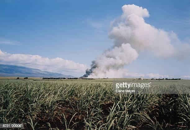 Smoke in Field