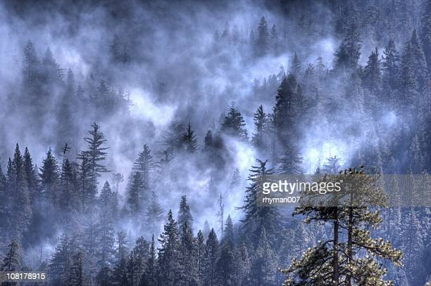 Smoke over a forest