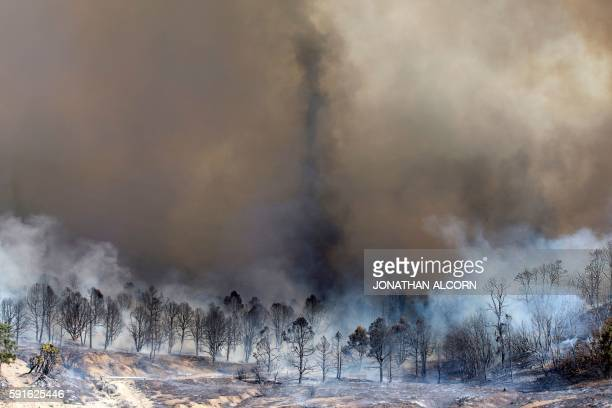 TOPSHOT Smoke rises from a burned out grove of trees at the Blue Cut wildfire in Wrightwood California on August 17 2016 A rapidly spreading fire...