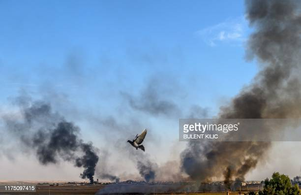 Smoke rises from the Syrian town of Tal Abyad, in a picture taken from the Turkish side of the border where a pigeon is seen in Akcakale on October...