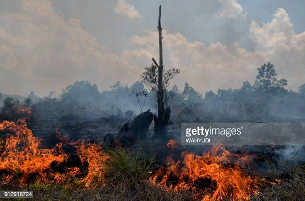 Smoke rises up from a peatland fire in Pekanbaru Riau province on February 1 one of 73 detected hotspots causing haze on the island of Sumatra The...