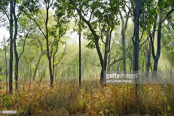 smoke though trees. kakadu. australia. - eucalyptus tree stock pictures, royalty-free photos & images