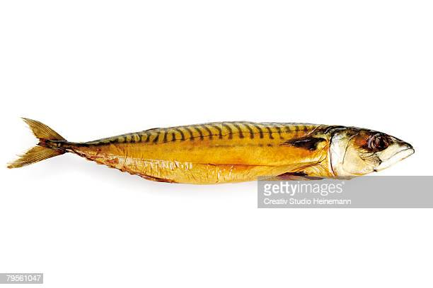 Smoked mackerel, close-up