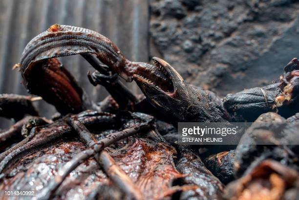Smoked monitor lizard is seen at the Baga fish market in Maiduguri on July 31, 2017. - The fish trade in Borno State has long been a lucrative...