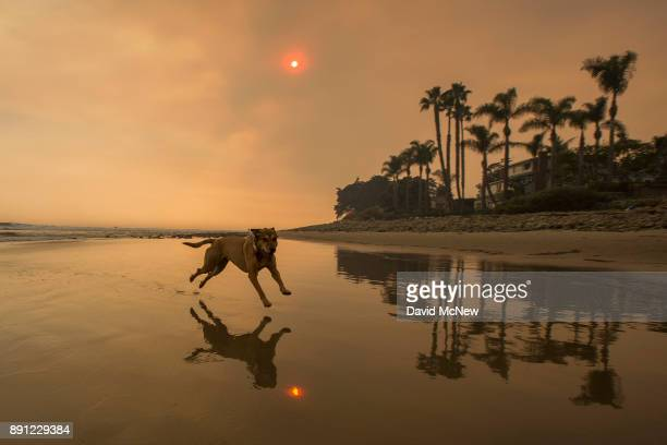 A smokefilled sky filter orange light around a dog on the beach as the Thomas Fire continues to grow and threaten communities from Carpinteria to...