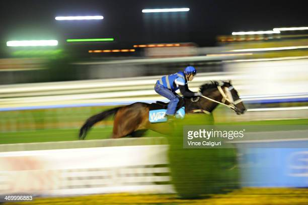 Smokin' Joey gallops on the course proper during a trackwork session ahead of the Blue Diamond Stakes meeting this Saturday at Caulfield Racecourse...