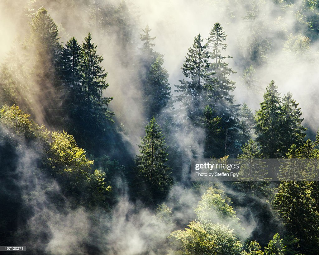 Smoky forest : Stock-Foto
