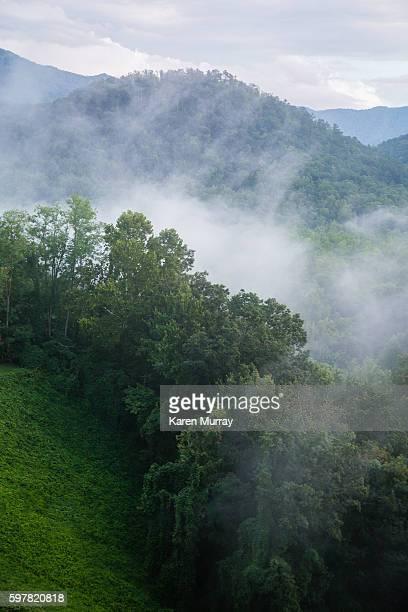 Smoky Mountain Mist