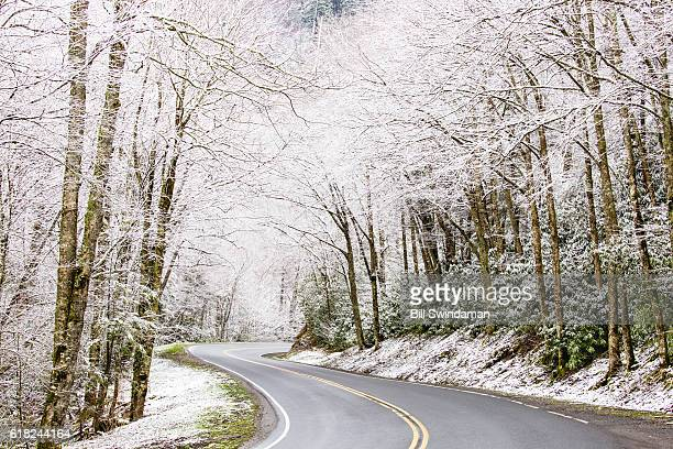 smoky mountain road with snow covered trees - newfound gap stock pictures, royalty-free photos & images