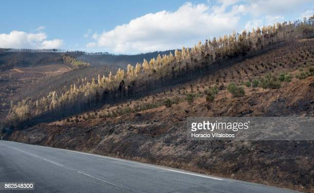Smoldering landscape is seen in the town outskirts on October 17 2017 in Alvoco das Varzeas Portugal Portugal's forest fires broke out on October 15...