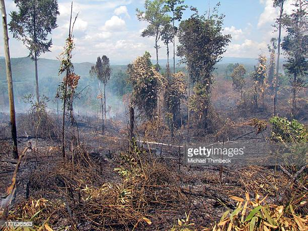 CONTENT] Smouldering remnants of a forest fire on Sulawesi Island Indonesia Fires are often used to clear forest covered land for plantation...