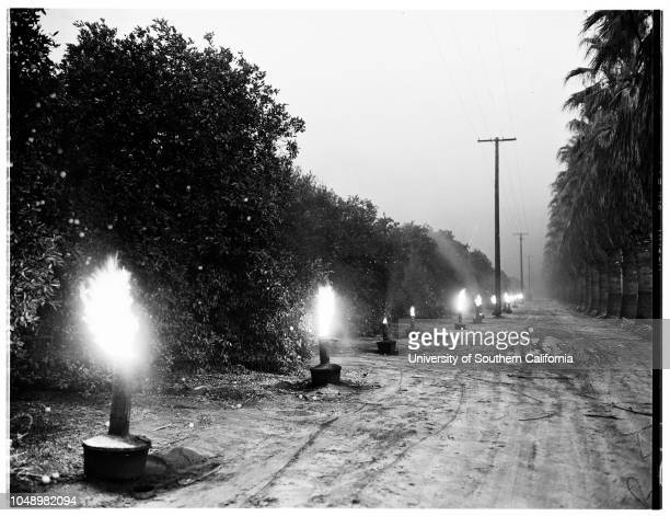 Smudging in Citrus Belt Area 04 January 1952 John MirelesJD MullenderFloyd D YoungClaude A ColeCaption slip reads 'Photographer McCarty Date Reporter...