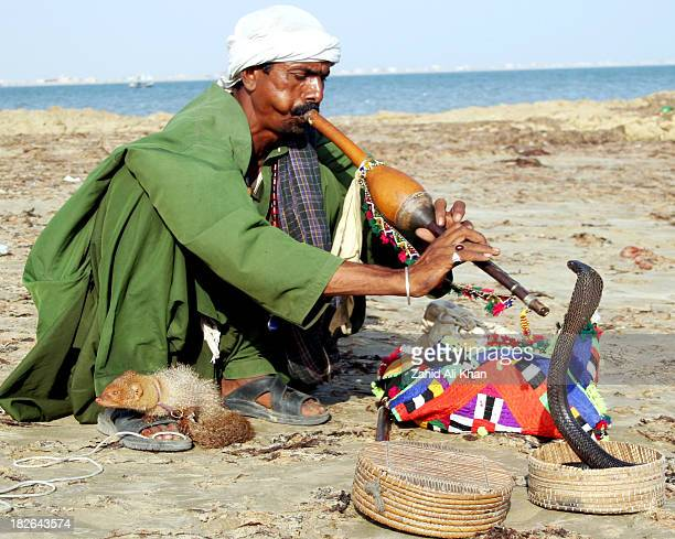 Snack charmer at hawks-bay beach Karachi. They show people fight between deadly Snake and Mongoose, it is a wonderful show to watch.